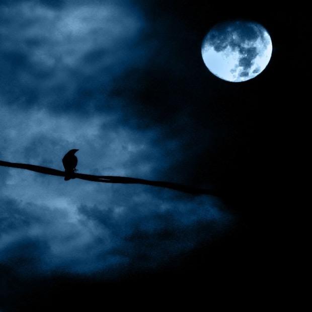 mbird at night